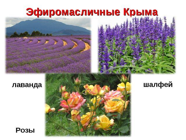 Эфиромасличные Крыма Розы лаванда шалфей