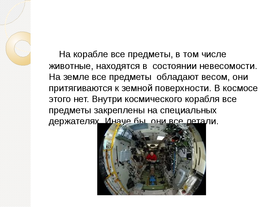 На корабле все предметы, в том числе животные, находятся в состоянии невесом...