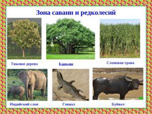 Ы саванн и редколесийЗЗона Зона саванн и редколесий Тиковое дерево Баньян Сло