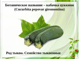Ботаническое название – кабачка цуккини (Cucurbita pepovar giromontina) Род т