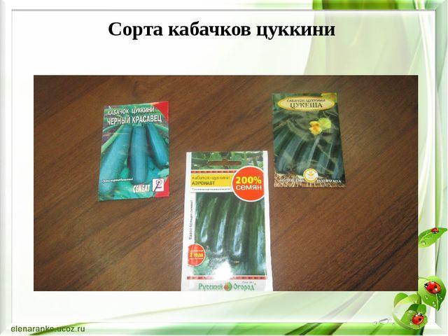 Сорта кабачков цуккини