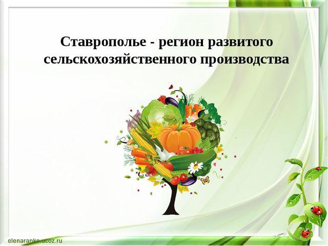 Ставрополье - регион развитого сельскохозяйственного производства