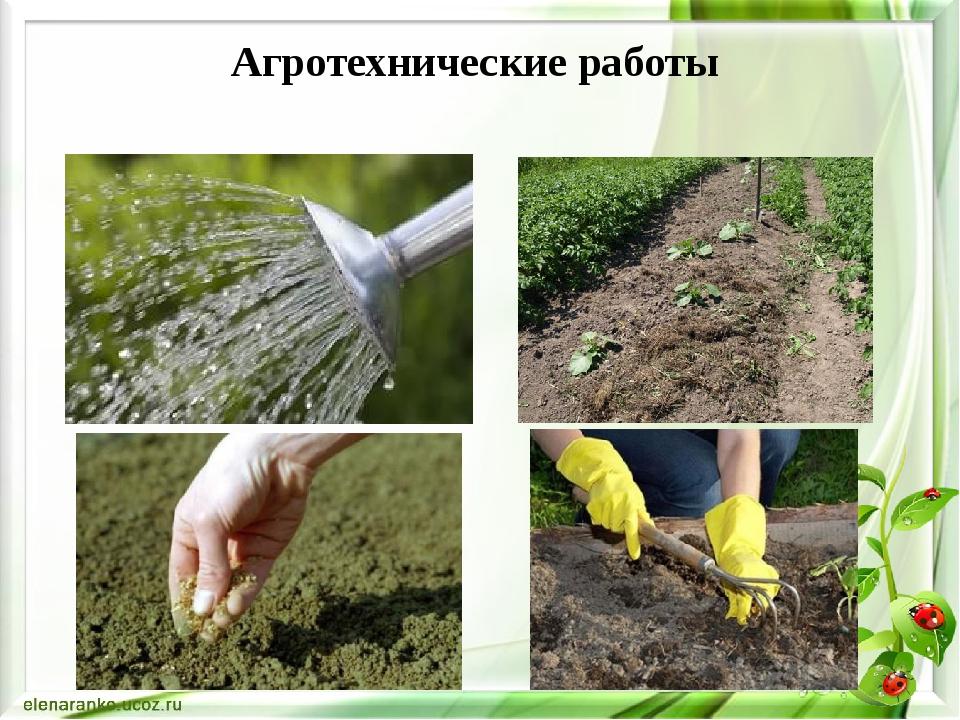 Агротехнические работы