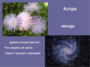 Астра звезда Девиз космонавтов: Per aspera ad astra Через тернии к звездам