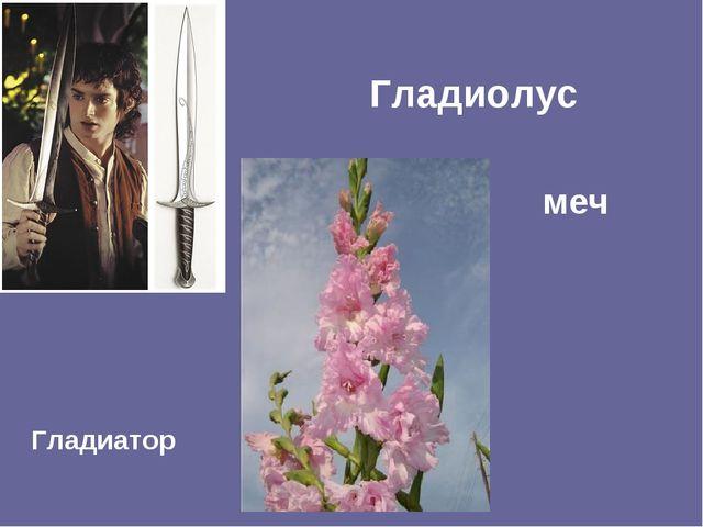 Гладиолус меч Гладиатор
