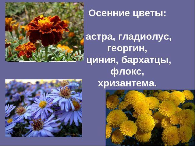 Осенние цветы: астра, гладиолус, георгин, циния, бархатцы, флокс, хризантема.