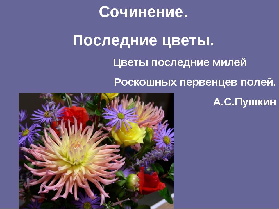 Сочинение. Последние цветы. Цветы последние милей Роскошных первенцев полей....