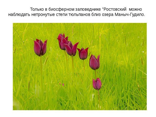 """Только в биосферном заповеднике """"Ростовский можно наблюдать нетронутые степи..."""