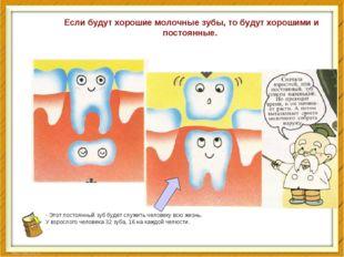 - Этот постоянный зуб будет служить человеку всю жизнь. У взрослого человека