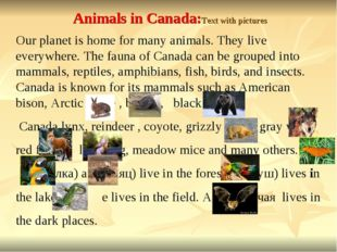 Animals in Canada:Text with pictures Our planet is home for many animals. The