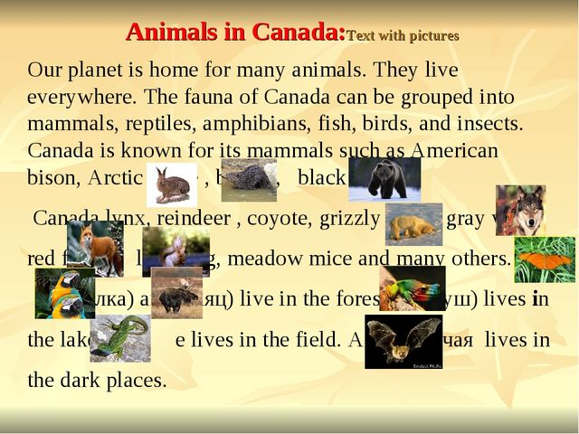 Animals in Canada:Text with pictures Our planet is home for many animals. The...