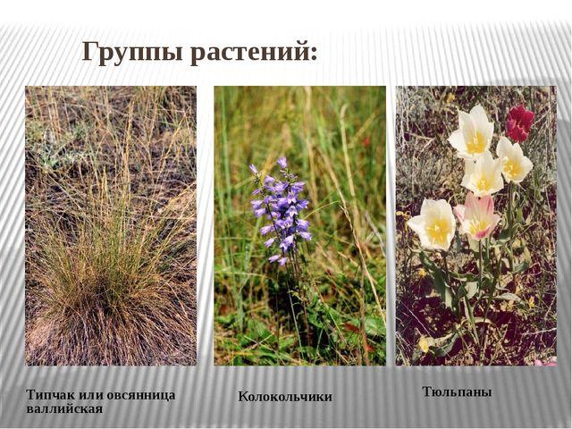 Группы растений: Типчак или овсянница валлийская Колокольчики Тюльпаны