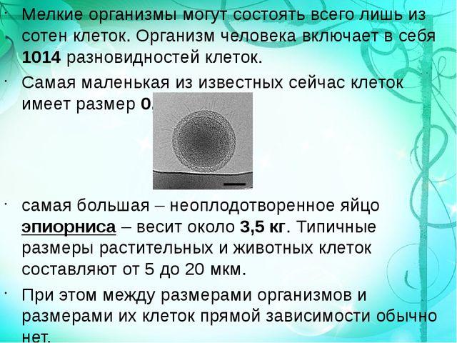 Мелкие организмы могут состоять всего лишь из сотен клеток. Организм человека...