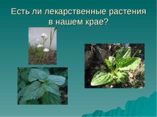 Есть ли лекарственные растения в нашем крае?