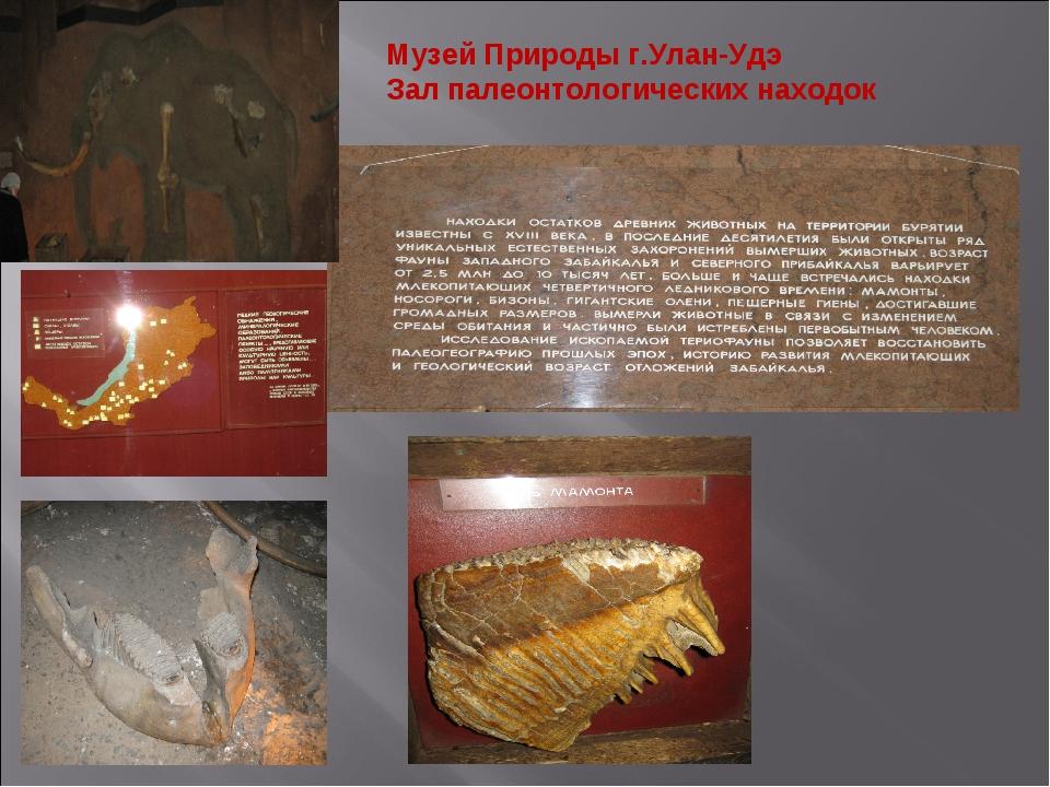 Музей Природы г.Улан-Удэ Зал палеонтологических находок