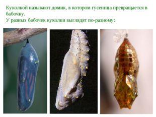Куколкой называют домик, в котором гусеница превращается в бабочку. У разных