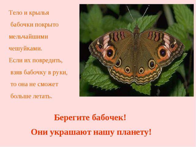 Тело и крылья бабочки покрыто мельчайшими чешуйками. Если их повредить, взяв...