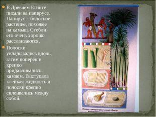 В Древнем Египте писали на папирусе. Папирус – болотное растение, похожее на