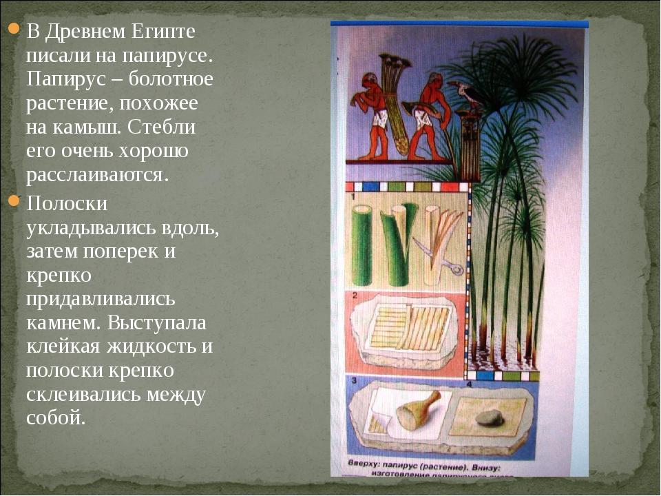 В Древнем Египте писали на папирусе. Папирус – болотное растение, похожее на...