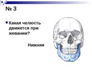 № 3 Какая челюсть движется при жевании? Нижняя
