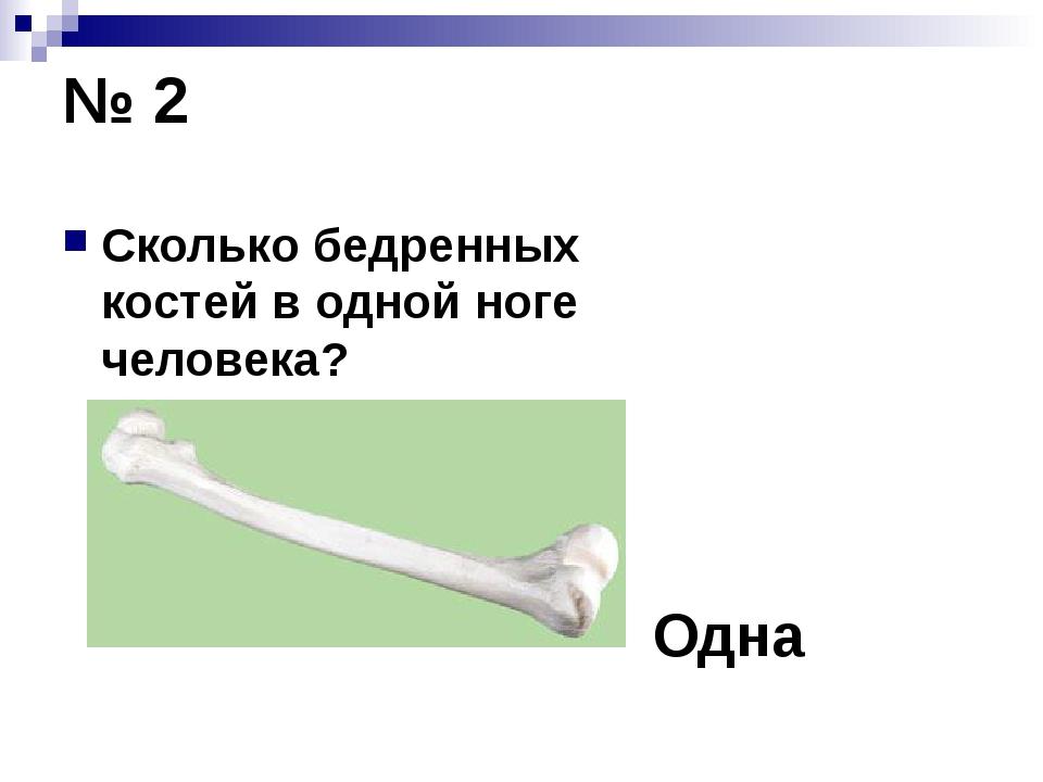 № 2 Сколько бедренных костей в одной ноге человека? Одна