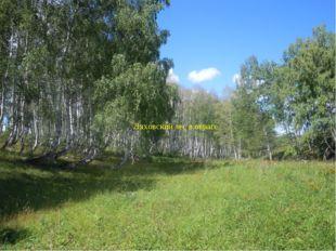 Ляховский лес в овраге