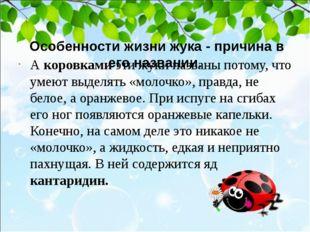 Особенности жизни жука - причина в его названии. А коровками эти жуки назва