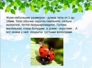 Жуки небольших размеров - длина тела от 1 до 18мм. Тело обычно округло-овальн