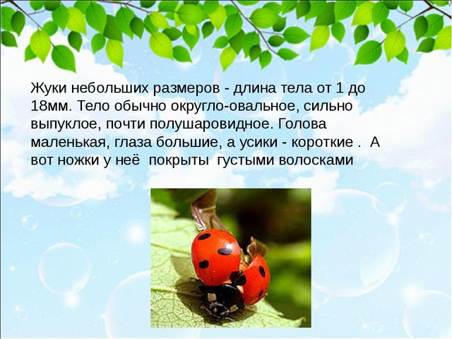 Жуки небольших размеров - длина тела от 1 до 18мм. Тело обычно округло-овальн...