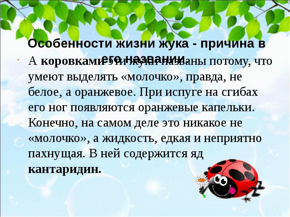 Особенности жизни жука - причина в его названии. А коровками эти жуки назва...