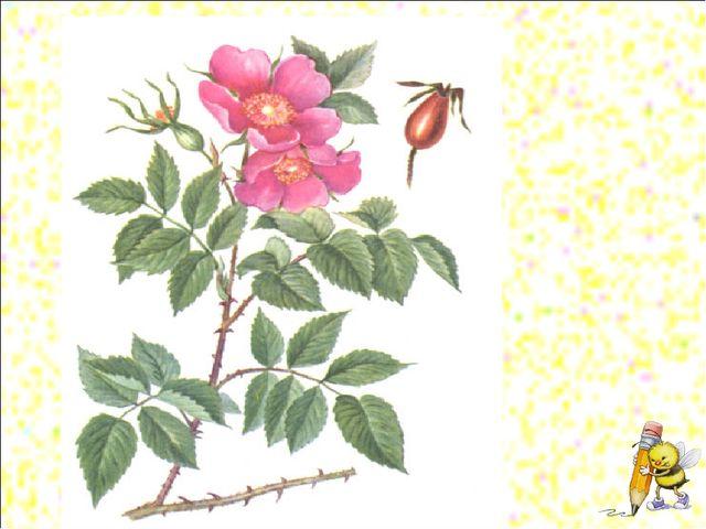 Рефлексия Зелены кусточки, Алые цветочки. Когти – коготочки Стерегут цветочки