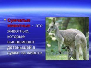 Сумчатые животные - это животные, которые вынашивают детенышей в сумке на жив
