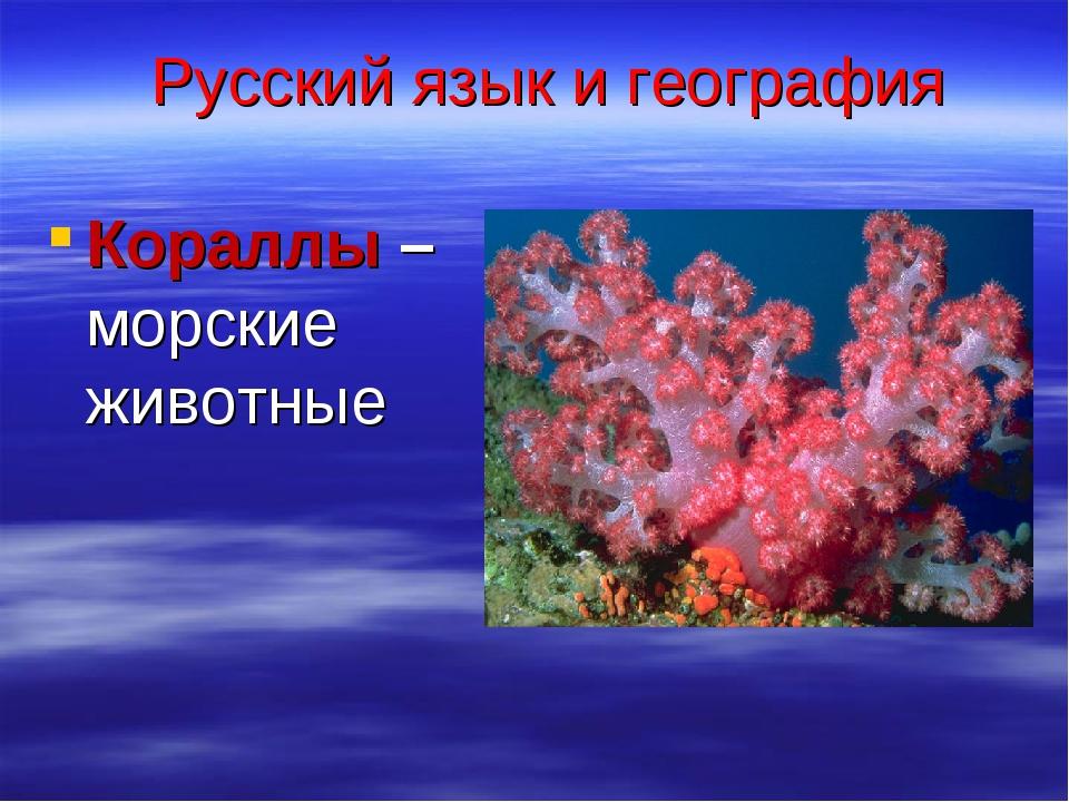 Русский язык и география Кораллы – морские животные