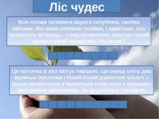 Ліс чудес Вся лісова галявина вкрита голубими, синіми квітами. Всі вони схили