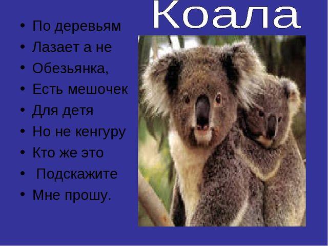 По деревьям Лазает а не Обезьянка, Есть мешочек Для детя Но не кенгуру Кто же...