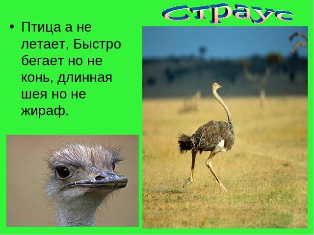 Птица а не летает, Быстро бегает но не конь, длинная шея но не жираф.