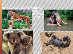 Современная дикая фауна Индии насчитывает около 350 видов млекопитающих, боле