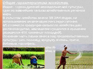 Общая характеристика хозяйства. Индия - страна древней земледельческой культу