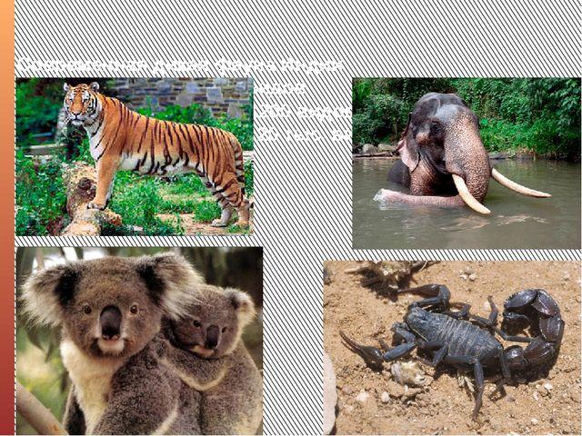 Современная дикая фауна Индии насчитывает около 350 видов млекопитающих, боле...