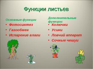 Функции листьев Основные функции Фотосинтез Газообмен Испарение влаги  Допол
