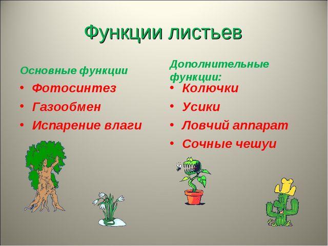 Функции листьев Основные функции Фотосинтез Газообмен Испарение влаги  Допол...