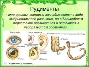Рудименты - это органы, которые закладываются в ходе эмбрионального развития,