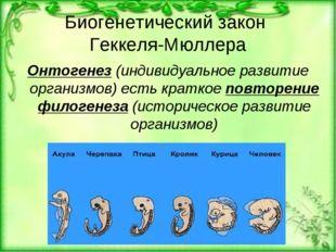 Биогенетический закон Геккеля-Мюллера Онтогенез (индивидуальное развитие орга