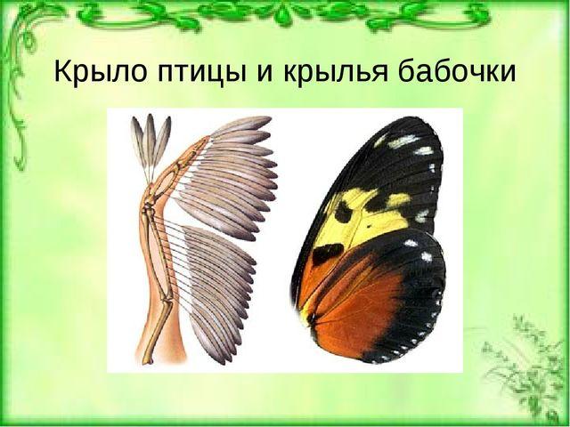 Крыло птицы и крылья бабочки