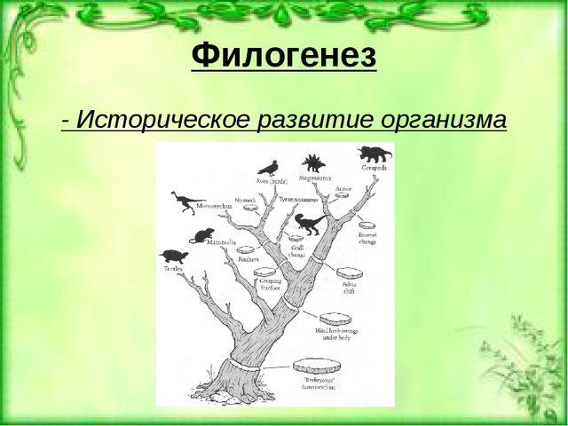 Филогенез - Историческое развитие организма