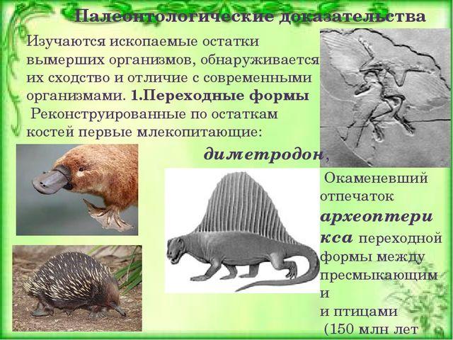 Изучаются ископаемые остатки вымерших организмов, обнаруживается их сходство...