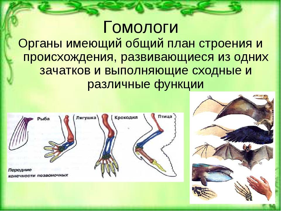 Гомологи Органы имеющий общий план строения и происхождения, развивающиеся из...