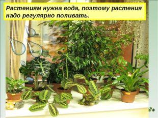 Растениям нужна вода, поэтому растения надо регулярно поливать.