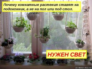 Почему комнатные растения ставят на подоконник, а не на пол или под стол. НУЖ
