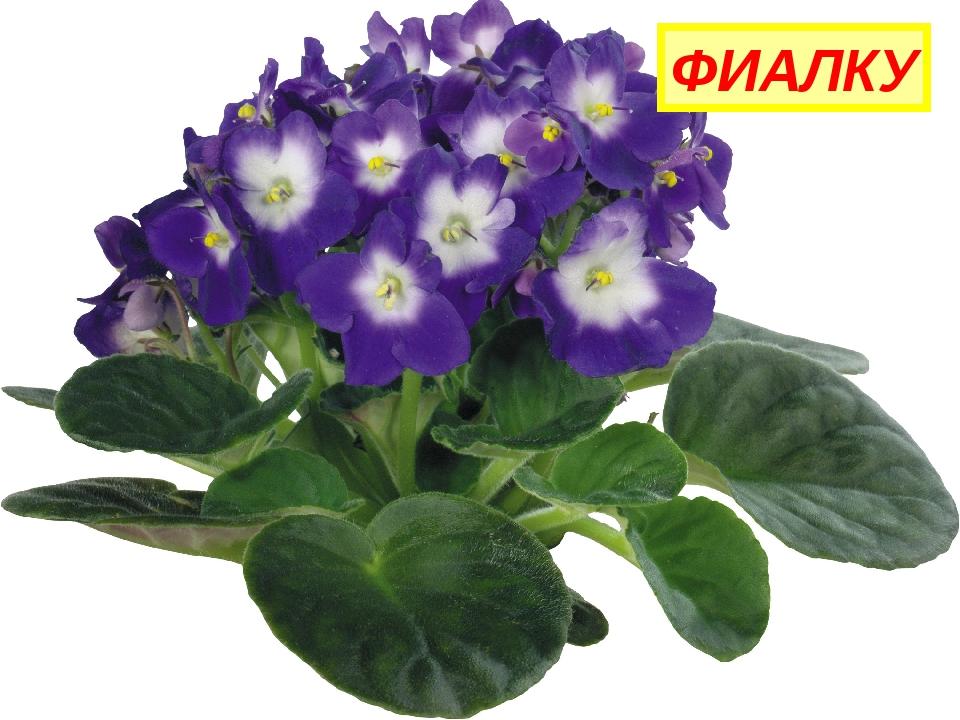 Просит у меня дружок Фиолетовый цветок. Мне отдать его не жалко, Подарю дружк...